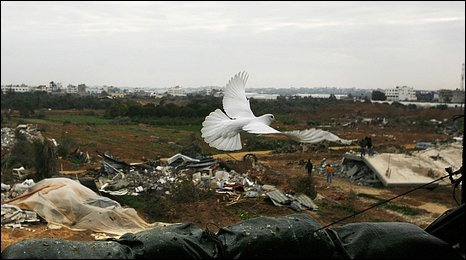 Gaza-Friedenstaube